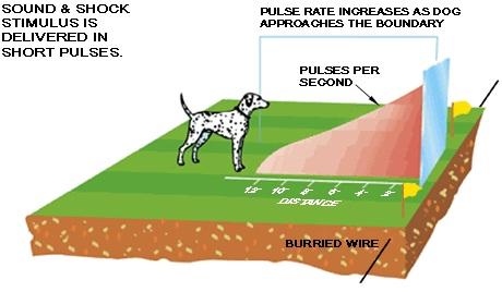 Чем ближе собака оказывается к границе участка, тем более мощным становится воздействие на нее разряда статического электричества