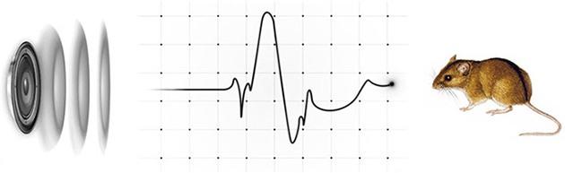 """Отпугиватель """"Град Ультра 3D"""" имеет запатентованную технологию формирования звукового рисунка, основанную на биоритмах грызунов"""
