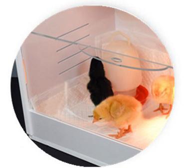 Стандартная комплектация брудера для цыплят включает кормушку и поилку