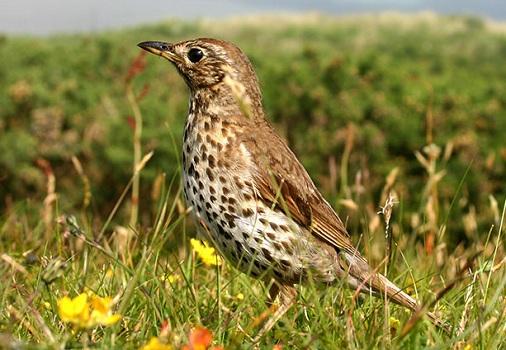 Голоса птиц и животных, воспроизводимые устройством, очень похожи на настоящие!