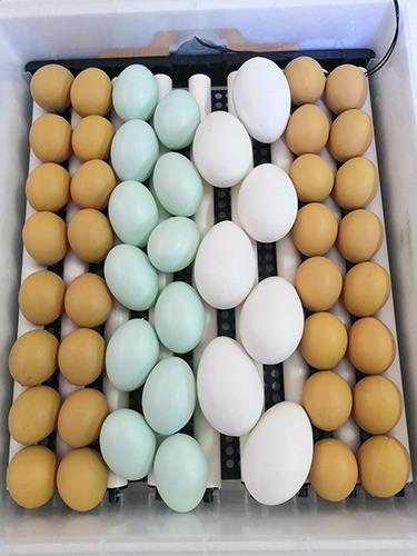 """Инкубатор для яиц """"SITITEK 196"""""""