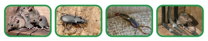 Биологический отпугиватель грызунов и насекомых SITITEK БИО-1