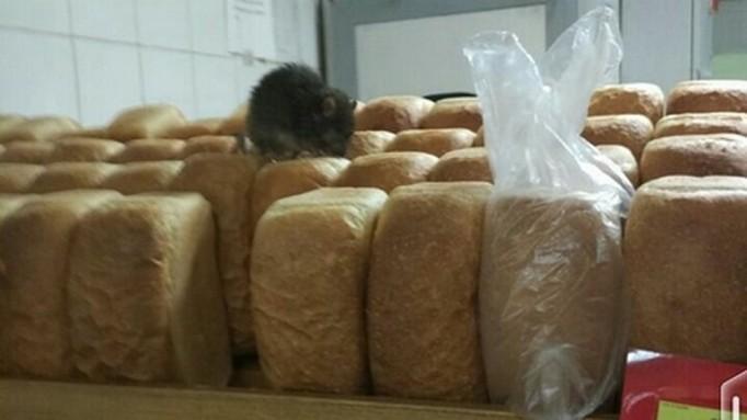 Крысы часто селятся в местах хранения хлебобулочной и другой пищевой продукции