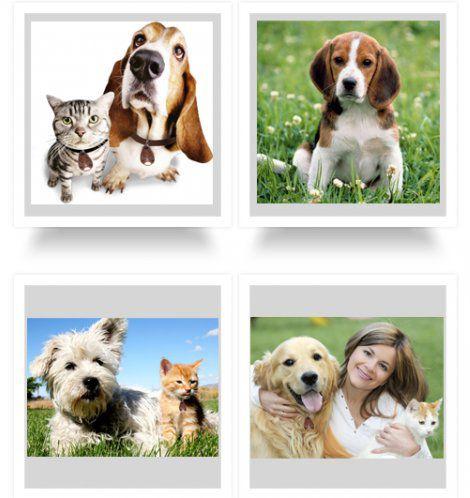 Отпугиватель идеально подходит для организации защиты как собак, так и кошек