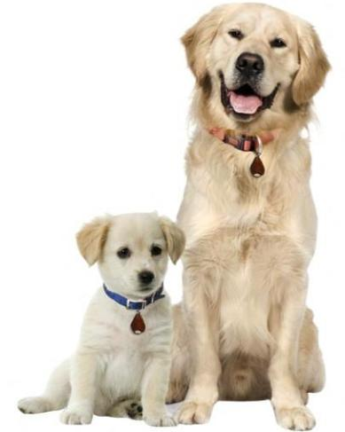 """С помощью отпугивателя """"TickLess Pet"""" можно защитить от нападений клещей как щенка, так и достаточно крупную собаку"""