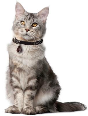 """Ношение отпугивателя """"TickLess Pet"""" не доставляет животным даже малейшего дискомфорта"""