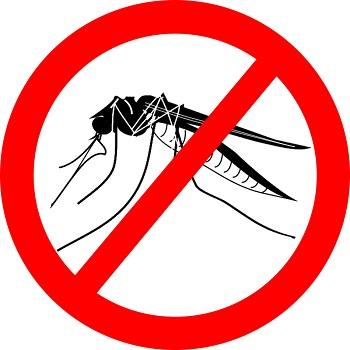 """Летнее """"нашествие комаров"""" — общая для всех проблема, с которой каждый борется по-своему"""