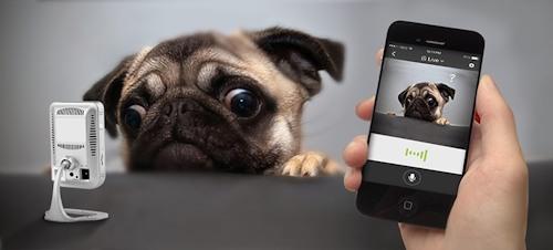 """Доступно """"живое"""" видео онлайн на вашем смартфоне"""
