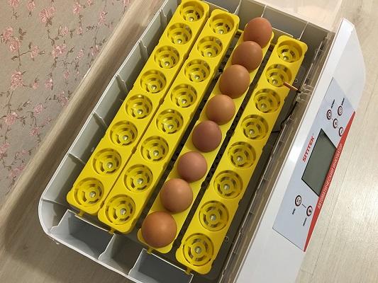 """Процесс """"созревания"""" яиц в инкубаторе полностью автоматизирован  (нажмите на фото для увеличения)"""