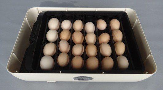 Прибор рассчитан на 24 куриных яйца