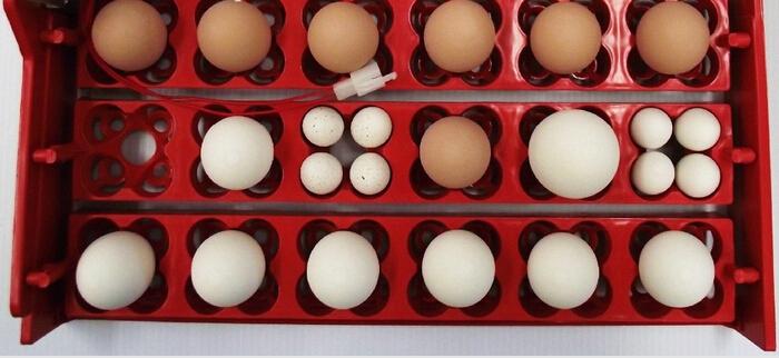 Пример расположения разных яиц в ячейках универсальных лотков