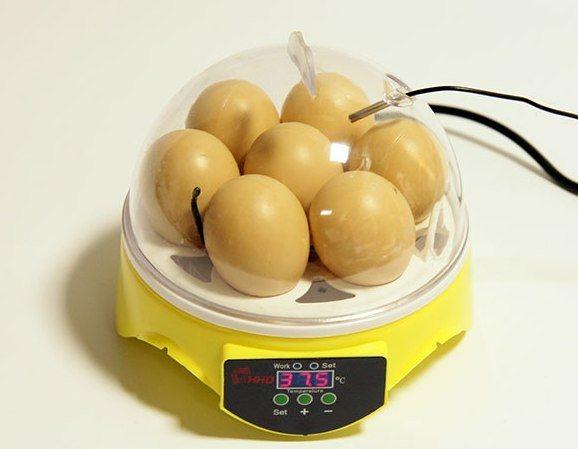 Под крышкой помещается ровно 7 яиц