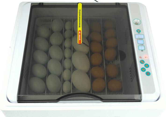 Автоматический инкубатор для яиц SITITEK 36