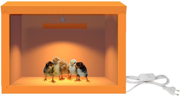 """""""SITITEK HD 35W"""" — брудер для выращивания  цыплят с идеальным соотношением цена/качество"""