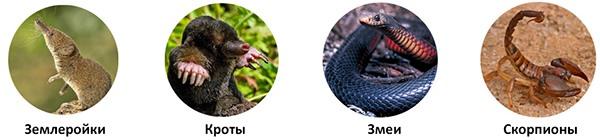 Отпугиватель эффективен против кротов, землероек, медведок, полевых мышей, змей, скорпионов, муравьев и некоторых других вредителей