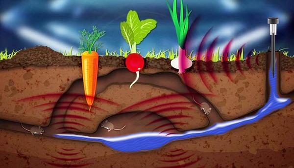 Залейте кротовьи норы водой, установите отпугиватель кротов SITITEK KM01 и присыпьте его землей